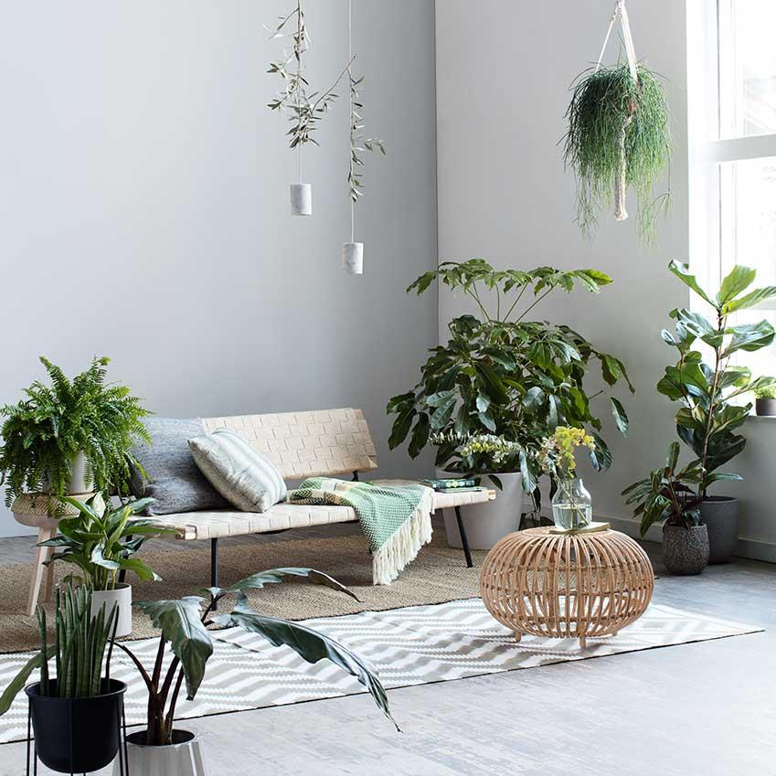 Fresh Indoor Plants Decoration Ideas For Interior Home: Zöldövezet Az Otthonunkban