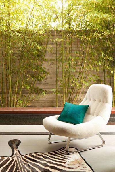 Zebra az erkélyen - erkély / terasz ötlet, modern stílusban